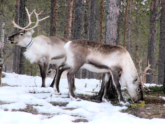 Severné Fínsko – Laponsko